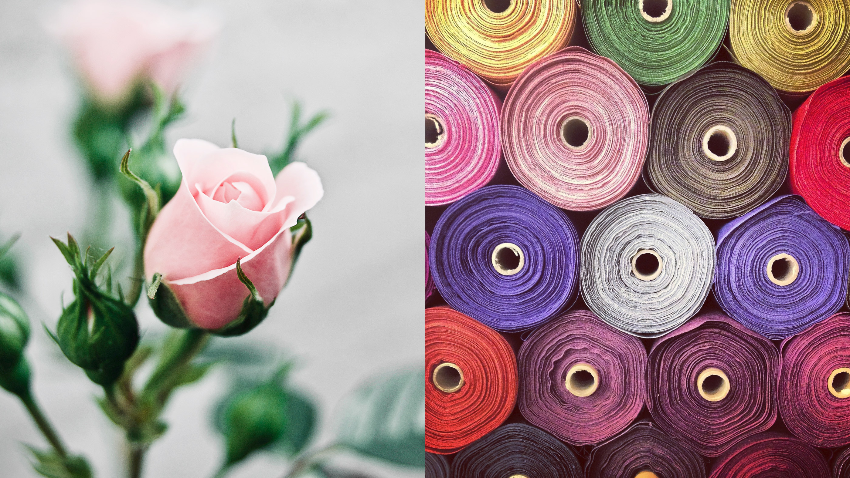young pink rose flower and fabric rolls